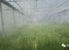 高压喷雾系统在设施农业中的应用